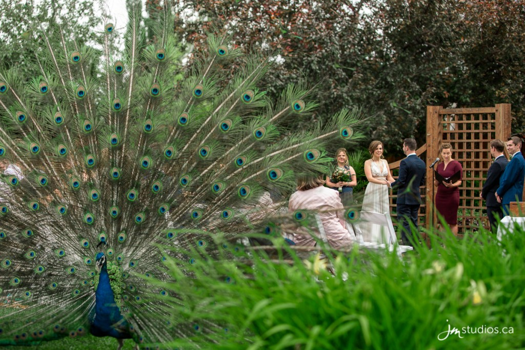 180630_1705-Calgary-Zoo-Wedding-Photos-Photographer-JM_Photography